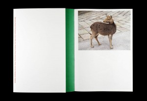 http://p-u-n-c-h.ro/files/gimgs/th-857_erik_van_der_weijde_this_is_not_my_book_02_0.jpg