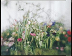 https://p-u-n-c-h.ro/files/gimgs/th-1814_Flora-flowers-by-Sachiko-Ito-photographed-by-Vincenzo-Castella-at-Jil-Sander-HQ-Milan-1-800x627.jpg