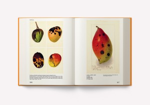 https://p-u-n-c-h.ro/files/gimgs/th-2110_9781733622042_An+Illustrated+Catalogue+of+American+Fruits+&+Nuts_PS09-lores.jpg